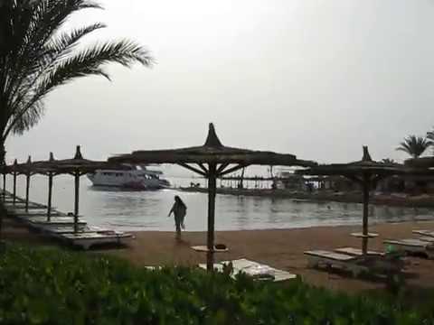 Пляж, прозрачная водичка, морской краб в отеле Sea Gull . Хургада, Египет.