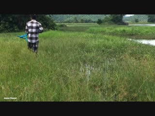 Amazing Crossbow Fishing - Creative Man Shooting Big Fish With Crossbow In My Village amazing crossbow fishing - creative man sh