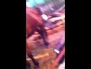 Сторис 110 Лошадки Июнь