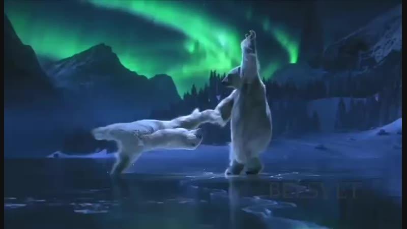 Белые медведи Танец на льду❄