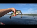Тест приманок. HITFISH Crawdroll LB Minnow 80SP