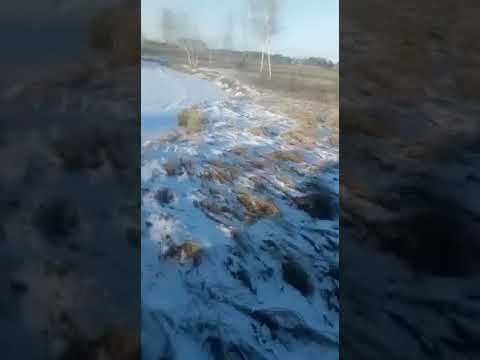 Китайские сточные воды текут в реку Пёра Амурская область