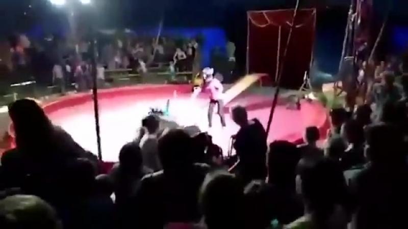 В Волгоградской области медведь напал на дрессировщика во время выступления в шапито Пора уже давно запретить все эти истязания