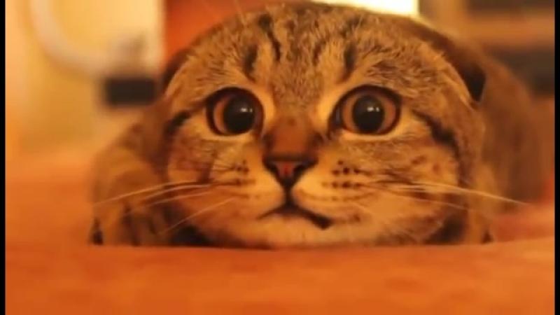 Кот смотрит Ужастики