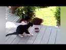 FUNNY VIDEOS ABOUT CATS 2016_(