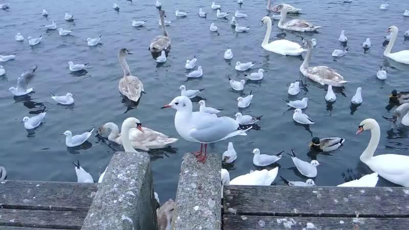 Цюрихское озеро - 03.12.2017 (02)