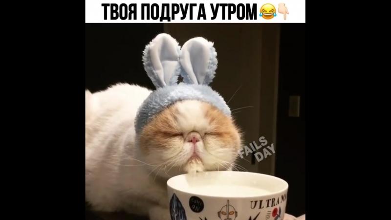 Мой любимый кроло-кото-вибр