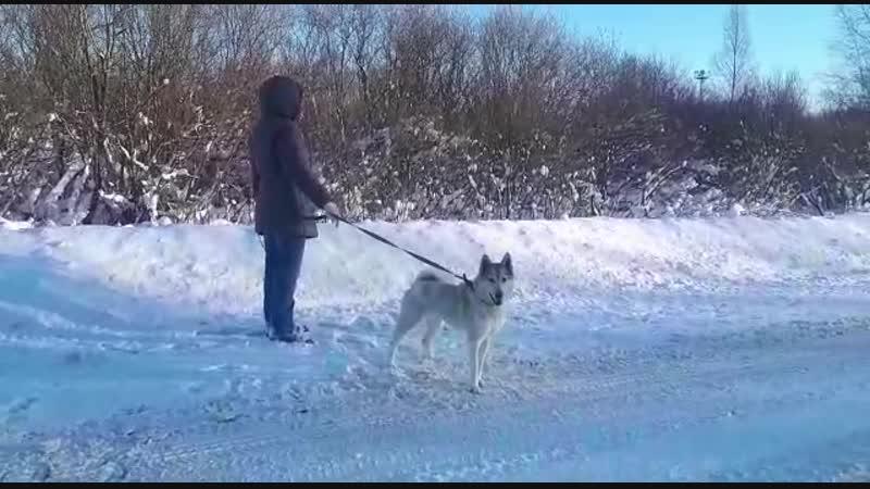 Белогурочка гуляет 12.01.2019