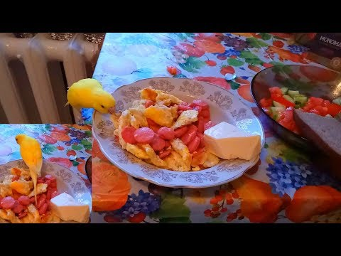 Попугай Чучи Сан наглая морда жрет мой ужин и затоптал яйца 19 08 2018