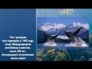 23 июля Всемирный день китов и дельфинов