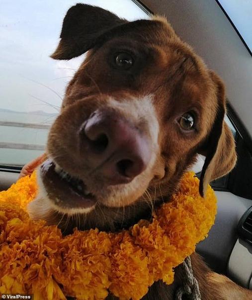 Тайские нефтяники спасли собаку, которая каким-то невероятным способом попала к ним на станцию, расположенную в 217 км от берега.