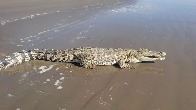 Загорающий крокодил || ViralHog