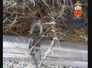 Сотрудники полиции вернули пропавшего жеребца жительнице Адамовки