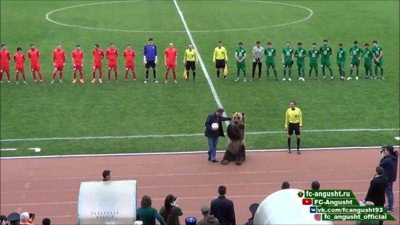 Медведь в Пятигорске ассистировал главному судье в футбольном матче Машук Ангушт