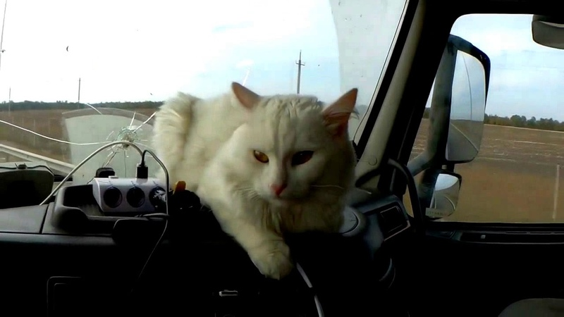 Modern Talking's 80s. D.White - All the Story is History. Magic walking truck cat nostalgia mix