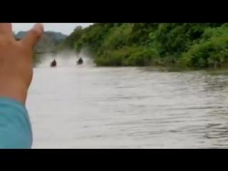 тайские монтры