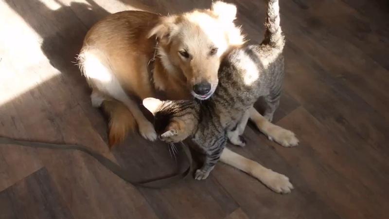 ЛИССИ: кошачьи ласки 🐾 БФ Лохматая Душа