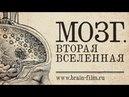 6 июня. Показ фильма «Мозг. Вторая Вселенная» Q A