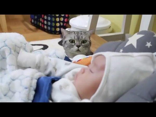 İlk Defa Bebek Gören Kedilerin Tepkisi