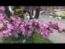 Цветущий Геленджик