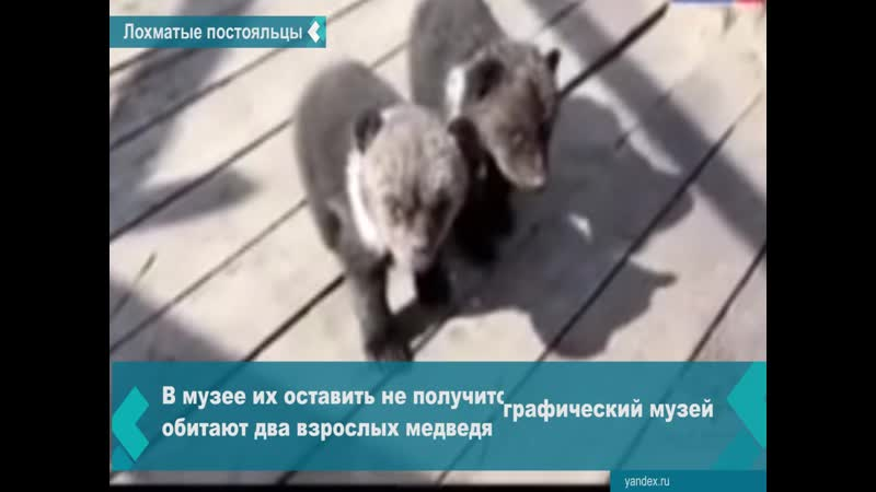 Бурятские полицейские выселили из отеля двух медвежат