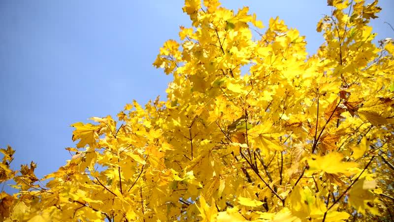 Посмотрите Ведь если листья падают значит это кому нибудь нужно