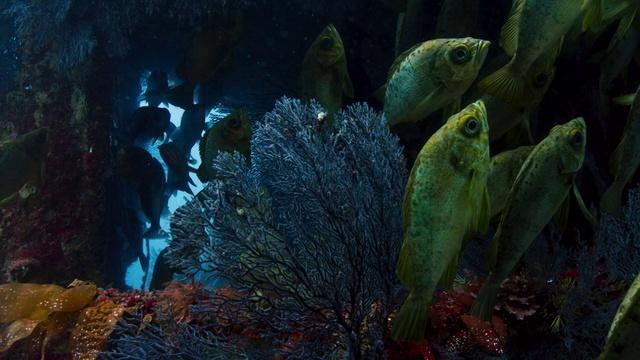 BBC «Голубая планета 2 (1). Один океан» (Познавательный, природа, животные, 2017)
