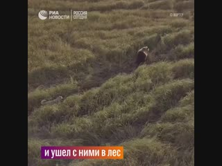 Дружба лайки и медвежьей семьи