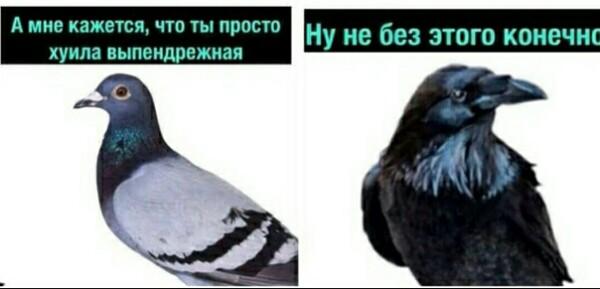 https://pp.userapi.com/c846121/v846121666/17a604/gbMWHcL-3mo.jpg