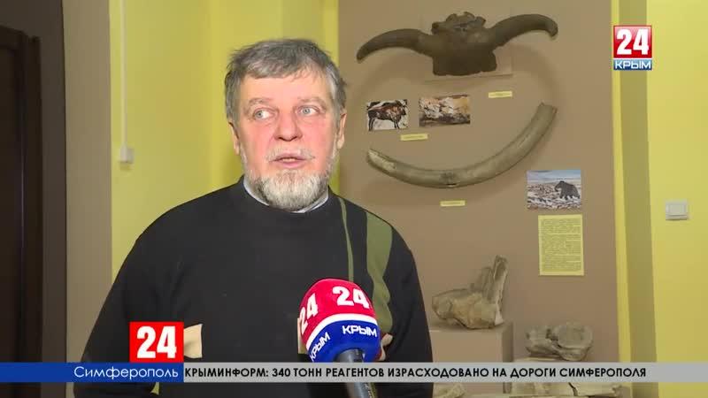 «Серая угроза» или оздоровление экосистемы В Крыму выросла популяция волков