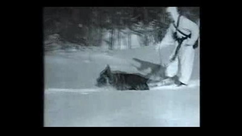 Фрагмент киножурнала Советская Карелия 1960 г №2 Сюжет о погранзаставе
