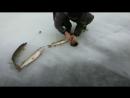 HUMOR - BULEN Лучшие приколы на рыбалке! Вот это Рыбалка!Прикольно!Жесть! №7271