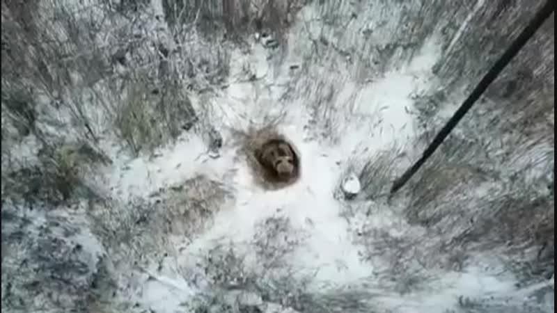Мишка в Снежинске