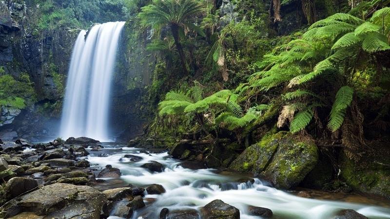 Дикие животные 24 часа - 9 серия : Тасмания. остров дьявола