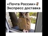 _kiko_shop_kms__1_09062018_0733.mp4