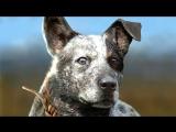 СМЕРТЬ ИОСИФА СИДА ►кооператив с RIKARA ► Far Cry 5 #13