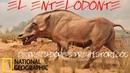 CERDO ASESINO,ENTELODONTE,LOS ANIMALES PREHISTORICOS MAS PELIGROSOS 5,DOCUMENTAL NATIONAL GEOGRAPHIC