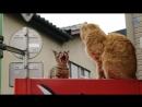 Denis Vlas Топ 10 Мяуканье кошек которые бесят вашего кота или собаку прикол над своим котом