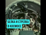 Белка и Стрелка в космосе