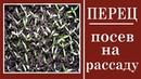 Посев перца на на рассаду Выращивание рассады в домашних условиях