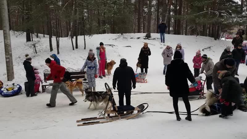 Парк Белые пески Рождество собачьи упряжки