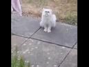 Yo ma! is that a fucking cat