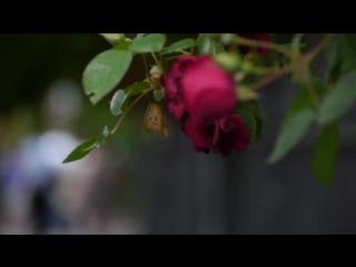 Marc Ribot - Bella Ciao (Goodbye Beautiful) (feat. Tom Waits)