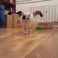 simona_marinkova video