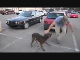 Только собака так верна человеку