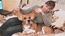 Приколы с животными 2018 Смешные Приколы с собаками Такса знакомится с Ёжиком и Бигль Ушастик
