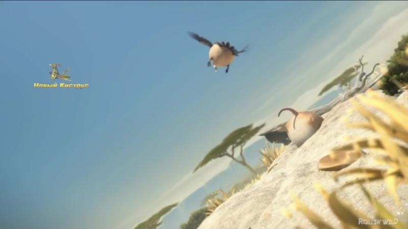 Клип про толстых животных Bisquit Zoo Zoo