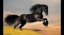 Песня про лошадь
