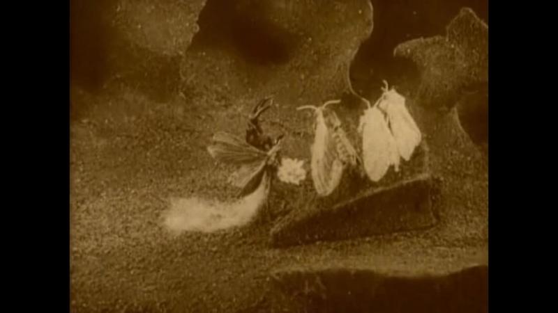 Редкие мультики. 1912 год. Весёлые сценки из жизни насекомых