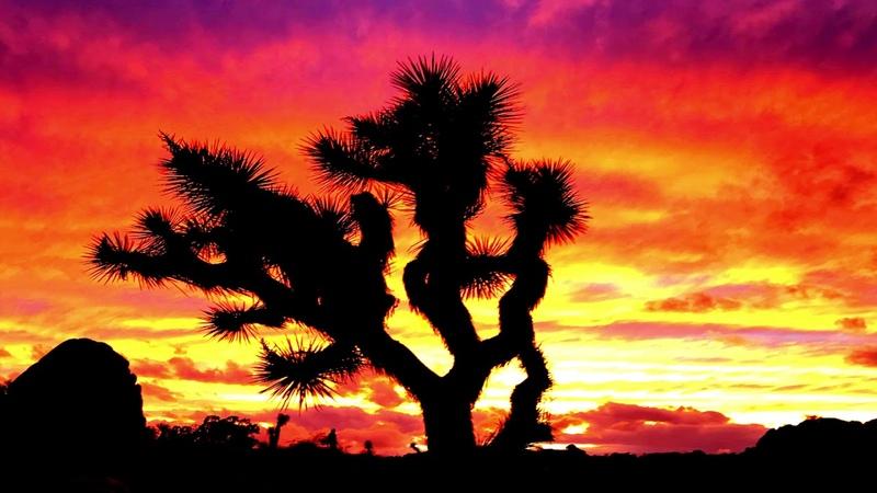 Baldhero Van Whelan - Neon Desert [Full EP]
